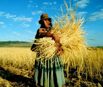 Subsistence agriculture on small farm plots is practiced in the highly elevated Altiplano of Chile and Bolivia (South America). Farmers in the arid highlands must cope with the variable weather conditions and extreme climatic uncertainty.