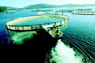 Small skiffs shuttle 80-meter-circumference salmon rearing pens around the harbor at a commercial fish farm in Dover, Tasmania, Australia. Pens must be moved periodically to reduce negative impacts of fish waste on substrate environments below the pens.