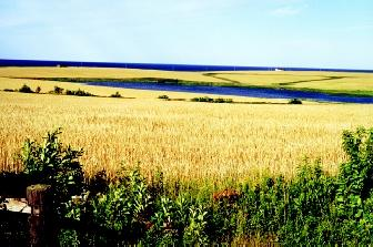 Prince Edward Island exemplifies a region with a maritime climate, moderated by the presence of the Gulf of St. Lawrence. The mild climate makes the area suitable for growing grain crops (shown here) and potatoes.
