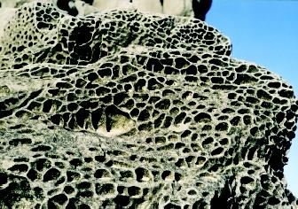 The weathering and dissolution of rocks and the chemical reactions involved were among the geochemical problems studied by Robert Garrels. Mineral grains from the pockmarked, honeycombed surface of this boulder on an Oregon beach are slowly being transported into the ocean.