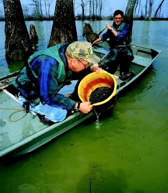 Two lake ecologists sample bottom sediments in Thighman Lake, Mississippi for small invertebrates, which are one indicator of ecosystem health. Imbalances in lower levels of the food web can affect the entire lake community.