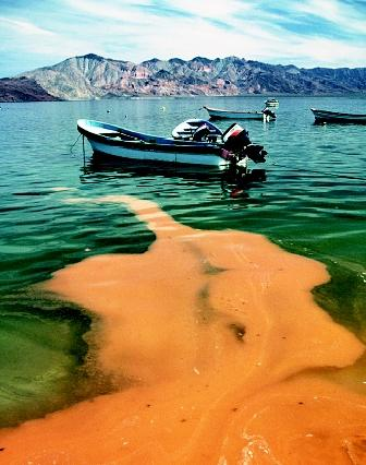 Heavy recreational use of lakes and reservoirs increases the chance of petroleum spills, sewage discharges, and releases of invasive species from watercraft. Integrated lake management is needed to protect water quality and to balance human and ecosystem needs.