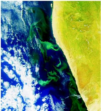 This 2002 satellite image by SeaWiFS (Sea-Viewing Wide Field-of-View Sensor) shows microcrystalline particles of sulfur off the coast of Namibia in southwestern Africa. Once thought to be a periodic phytoplankton bloom, the highly visible occurrence (shown here as wispy areas near the coast) is now known to be the result of periodic hydrogen sulfide gas eruptions from the diatomaceous sediments underlying the highly productive waters of the northern Benguela upwelling zone. Anaerobic microbial breakdown of decaying phytoplankton produces hydrogen sulfide gas in the seafloor sediment, and the gas buildup is periodically released, rising and oxidizing as it approaches the water surface. The hydrogen sulfide released from the surface waters causes the Namibian coast to smell like rotten eggs, and it often drives away lobsters.