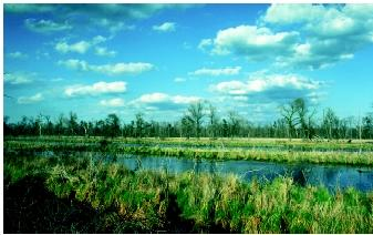 The National Environmental Policy Act is intended to promote environmental considerations into federal agencies' decision-making processes. Impacts on wetland systems (shown here) often are the subject of NEPArelated processes.