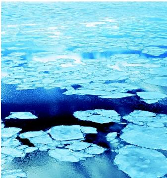 In polar oceans, seasonal melting of sea ice creates gaps in the ice cover, thereby allowing more sunlight to penetrate the surface waters. The favorable light conditions stimulate phytoplankton growth and yield surges in primary productivity.