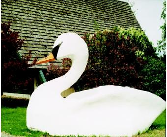 Opinions, hobbies, culture, and religion can hinder regulatory measures to control and eradicate some nonnative species. Mute swans, an aggressive bioinvader, ironically are admired by some waterside homeowners and other local interests. This large fiberglass replica greets visitors to a Michigan tourism office.
