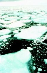 Ice floes and other forms of sea ice are less salty than the sea water from which they formed, owing to a process known as brine rejection. Yet sea ice still is too salty to be melted for human consumption. Only icebergs, which are derived from glaciers, are composed of fresh-water ice.