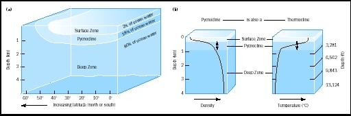 Density stratification (layering) in the ocean is an important feature that influences biological, chemical, and physical processes. As part (a) shows, a shallow surface zone of relatively warm, low-density water overlies a layer called the pycnocline, in which density increases rapidly with depth. Below the pycnocline lies the deep zone of cold, dense water, accounting for about 80 percent of total ocean volume. As part (b) shows, the rapid density increase in the pycnocline is mainly a result of a rapid decrease in temperature (with depth). The pycnocline therefore coincides with the thermocline—a region of rapid temperature change. The pycnocline sometimes may also coincide with the halocline, where salinity increases rapidly with depth; this may occur in shallow water near rivers, for example.