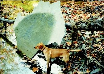 This mudstone slab in the small floodplain of a central Indiana stream most likely originated from the adjoining bluffs, and was floated, pushed, and tumbled along by seasonal high flows and woody debris carried in the stream current. A year after this photograph was taken, the slab was gone, indicating it was either repositioned and buried by new sediment, or it was broken into smaller pieces by a combination of frost action and erosional and mechanical forces.