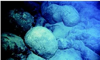 "Pillow lava forms when magma issuing from fissures in the ocean floor contacts the cold sea water. The lava can take a number of shapes, including pillow-shaped, blistershaped, and balloon-like. Individual ""pillows"" can reach more than 7 meters (23 feet) in diameter."