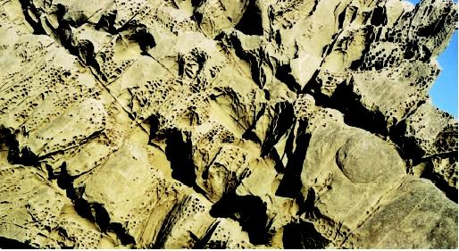 This photograph shows differential weathering of a fractured rock surface. Water has preferentially gained access to the large fractures running from upper left to lower right and has weathered these areas faster than the rock face. The pockmarked surface represents an intensely fractured part of the rock that was later filled with silica. Silica is harder than the original rock, so as the rock weathers away, the silica, marking the fracture lines, stands out in bold relief.