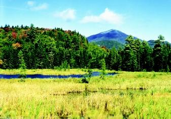 Although many people associate wetlands only with river floodplains and other low-lying areas, they can occur in mountains, high plains, and other elevated terrain. Freshwater marshes, such as the one shown here in Vermont's White Mountains, are distributed worldwide and form in a variety of settings.