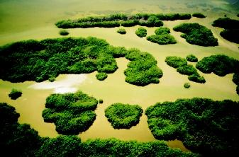 Mangroves are forested wetlands found in bays, estuaries, and leeward sides of islands and peninsulas in tropical and subtropical regions. They provide ecosystem services by exporting organic matter to coastal food chains and by physically stabilizing coastlines.